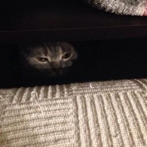 猫は飼い主が見ていないところで、極秘任務を成功させている(7コマ)