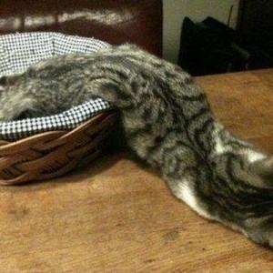 どうしてそうなる!(笑)「ネコは液体である」という9の証拠【画像】