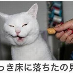 【厳選】寒さも疲れも吹っ飛ばせ!笑って癒されるネコ画像ボケて14選