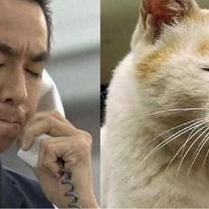 似ている!(笑)動物の写真にそっくりだった有名人たち【11選】