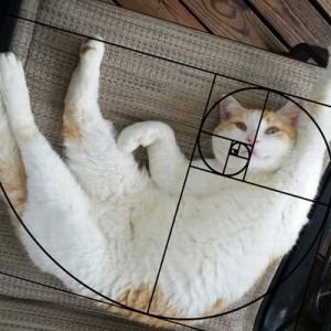 だから魅了されるのか!(笑)猫が何をしてもパーフェクトな理由は…【12枚の証明】