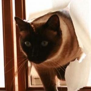 「障子を張り替えたって聞いたんだけど本当?」ネコの画像で一言ボケて!(11選)