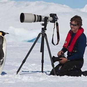 違う、そうじゃない!(笑)野生のペンギンはカメラを珍しがって近づいていく傾向が→三枚目w