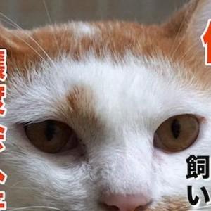 「思わず吹き出した」・「これぐらい強気で良い」猫の譲渡会のポスターがインパクト抜群だった