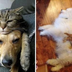 すごおおおおく納得!(笑)よくわかる「犬と猫の違い」&「イヌ・ネコの気持ち」10選