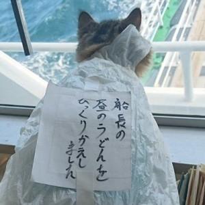 叱らないであげて!(笑)船長のうどんをこぼして反省中?→『猫の航海士』の日常が可愛すぎた9枚