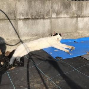 会う度に撫でていた猫が「ちょっとついて来て」と歩きだす(笑)→向かった先には…3枚