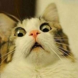 「ルンバがどんどん自分の餌を吸い込んでいく」思わず吹き出す!猫でボケて11選