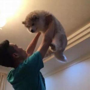 「こんなにちっちゃかったのに…!」子犬を抱きかかえる飼い主、9ヶ月後の姿に『予想外』5枚