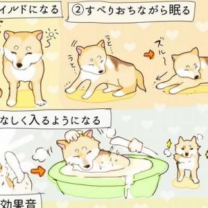 「うちの犬が老犬になって可愛かったところ」のまとめイラストに共感多数、愛犬家たち…わかる!
