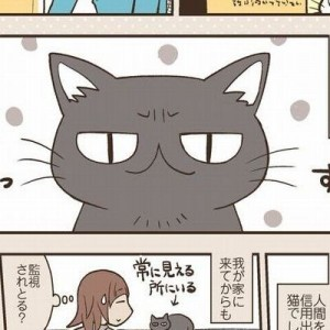 亡くなった愛猫がよくしていた『謎の仕草』。その意味を知って思わず…2枚
