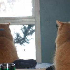 素晴らしい!(笑)「うちの猫が毎日、鳥を見るときのポーズ」→可愛すぎる【3枚】