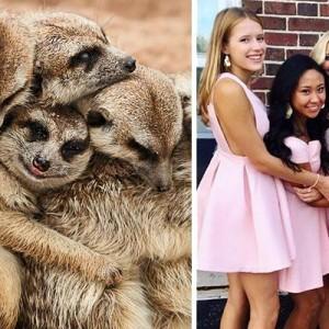 こんなところに共通点が!(笑)女子の写真の撮り方は「ミーアキャットと一致する」8枚