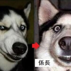 社長、部長、課長、係長、平社員、研修生!会社の役職を犬で例えるとこんな感じですよね(画像)