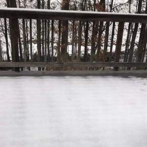 「うちの屋根からリスが落ちたっぽい」この写真は多分…間違いない(笑)