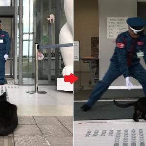 美術館の『猫まみれ展』に珍客が!黒猫と警備員の攻防戦が話題に、「微笑ましい!笑」