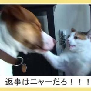 「あなたの知らない世界がここに!」笑劇場!犬と猫の合体ボケて!(10選)