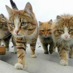 カッコ良すぎでしょ!(笑)音楽バンドとして名曲を披露してそうな動物たちの写真9枚