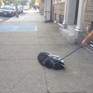 飼い主が散歩を終わらせようとした結果→その後また行くフリをした結果(笑)