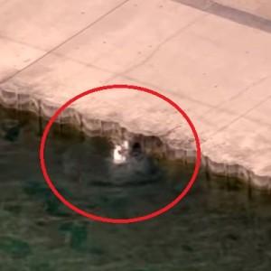 湖で犬が溺れそうになっている→そこにいち早く駆けつけたのは…素晴らしい!