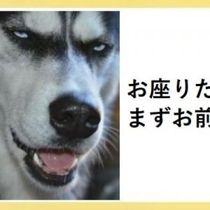腹筋崩壊?いや…癒しだ!こんなの笑うわ「動物系」ボケて!(11選)