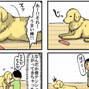 「大型犬には5歳児くらいの知能があるらしいんだ」犬と猫との日常生活がめっちゃラブリー!