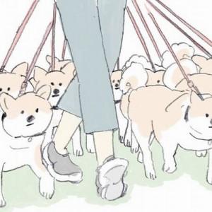 【今この漫画が癒される!】柴犬を沢山連れて散歩をしたい!けど、全員にこうされたら…(笑)