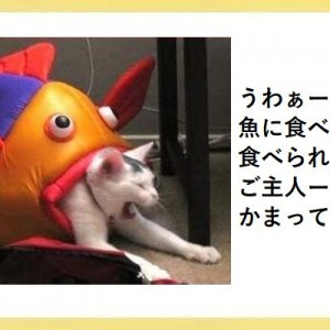 笑いと可愛さが同時に襲う!連続で吹き出す犬と猫のボケて!(11選)