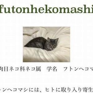 可愛すぎか!(笑)ネコを「フトンヘコマシ」と呼ぶ父の研究レポートに笑ってしまう3枚