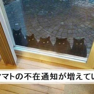 【破壊力抜群】絶対笑う!クロネコヤマトでボケて!(11選)