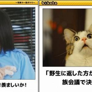 【吹き出してしまった…w】破壊力高し!猫が主役の画像でボケて!(11選)