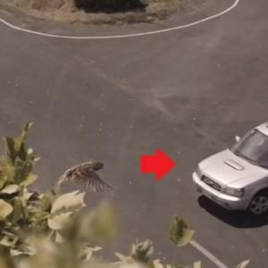 「これ見たら絶対交通事故減るから」全ての運転手に見てほしい衝撃的な訴え