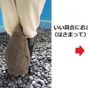 2年前に話題になった、飼育員の足に挟まろうとするペンギンの赤ちゃん→現在の姿が投稿される(笑)