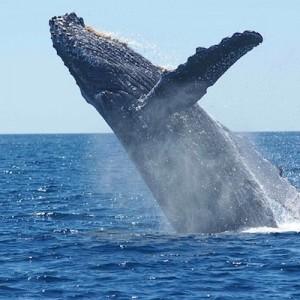 「クジラは特別な動物と思わないか?」水産庁の捕鯨反対派に対する回答が完璧『ぐうの音も出ない』
